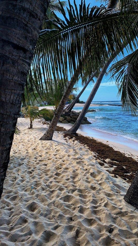 Beautiful Reasons Why You Should Choose Barbados